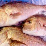 !美味しい魚の選び方!