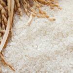 お米研ぎ過ぎてませんか?|お米の正しい研ぎ方と下処理【旨味を残してふっくら炊くためのコツ】